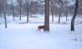 deer02s