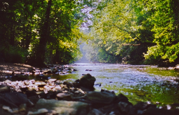 The Wissahickon Creek