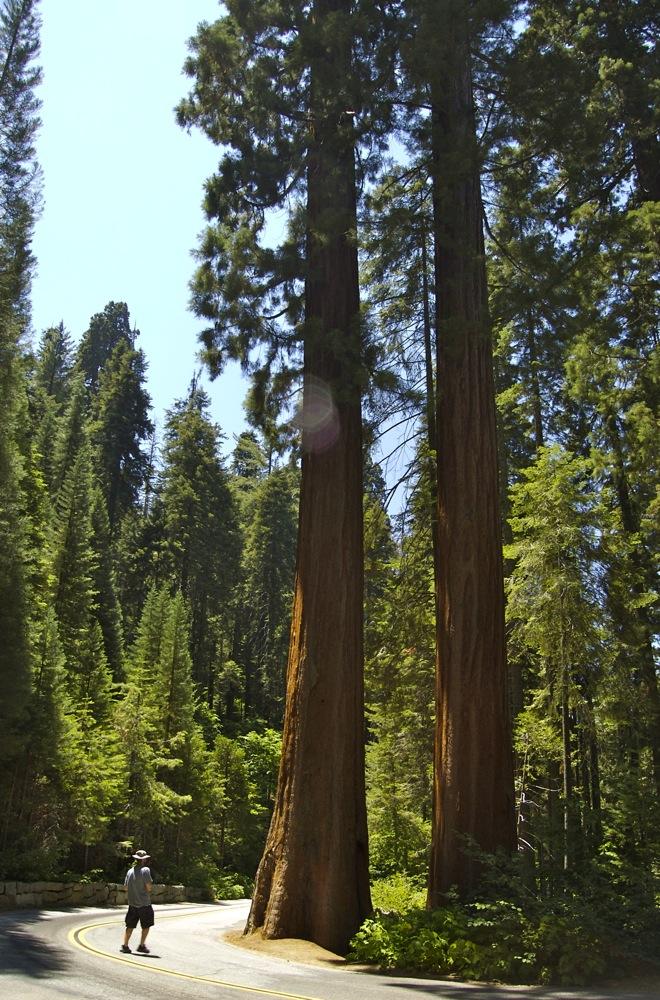 Sequoia_2006_03
