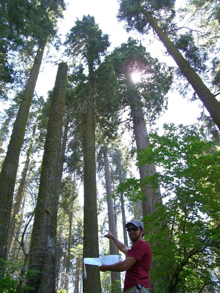 Sequoia_2006_06