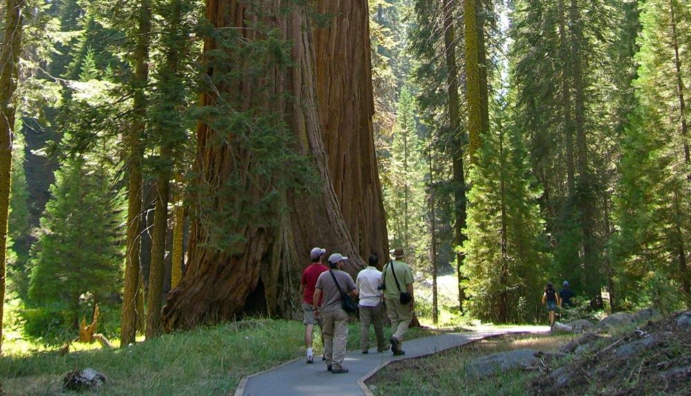 Sequoia_2006_10