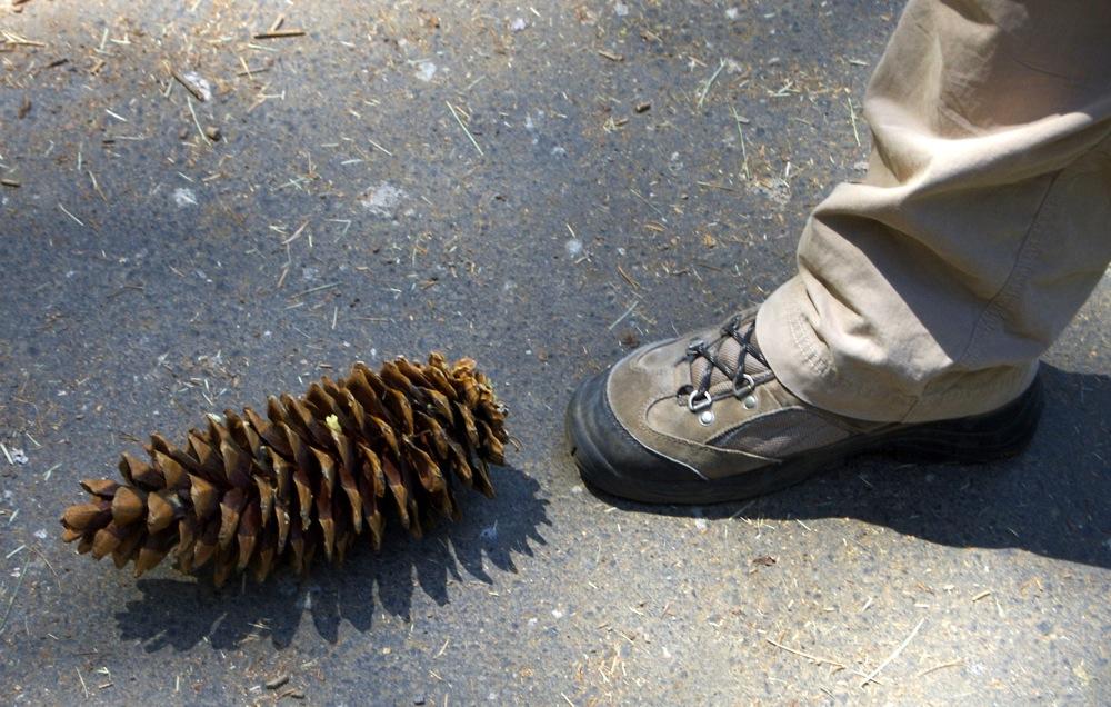 Sequoia_2006_12