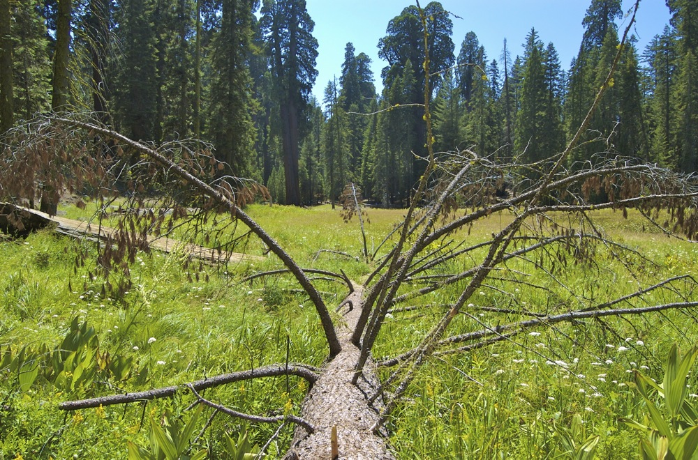 Sequoia_2006_14