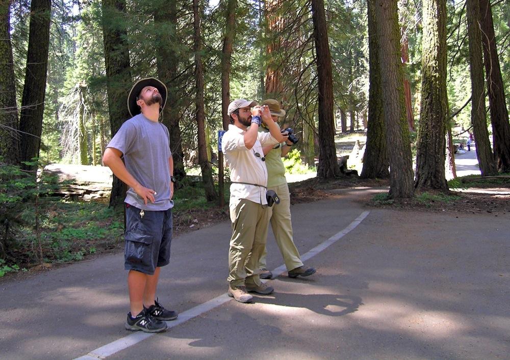 Sequoia_2006_16