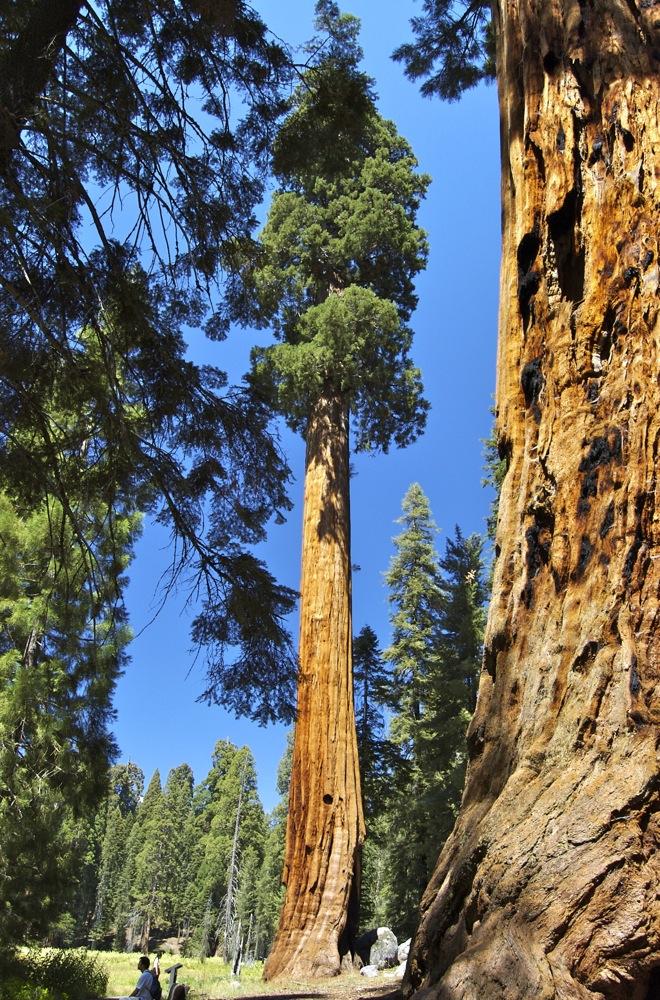 Sequoia_2006_19