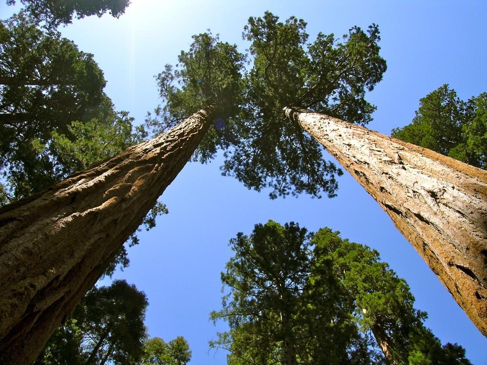 Sequoia_2006_21