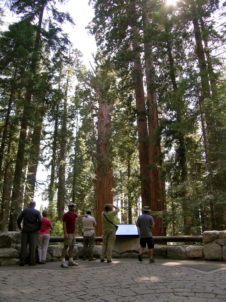 Sequoia_2006_27