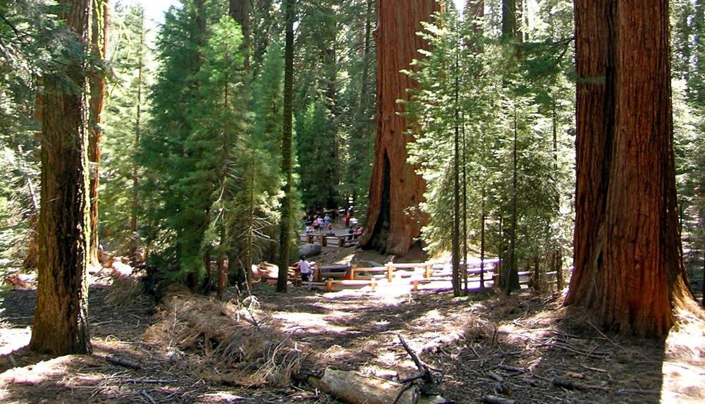 Sequoia_2006_28