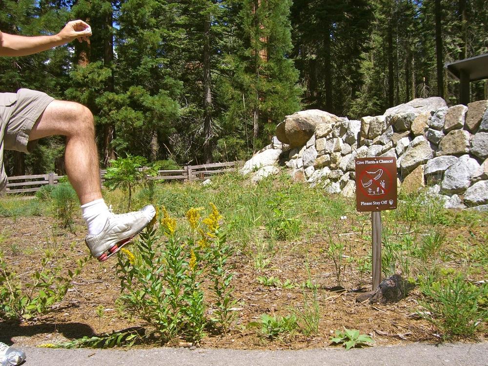 Sequoia_2006_30